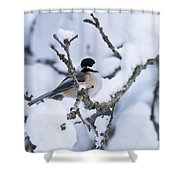 Chickadee Pictures 507 Shower Curtain