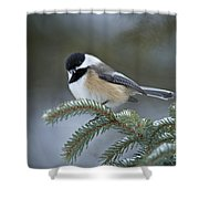 Chickadee Pictures 521 Shower Curtain