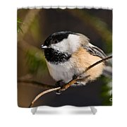 Chickadee Pictures 561 Shower Curtain