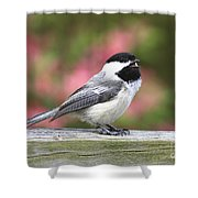 Chickadee Song Shower Curtain