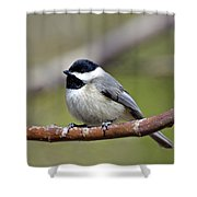 Chickadee Shower Curtain