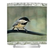 Chickadee With Frame  Shower Curtain