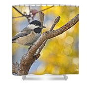 Chickadee With His Prize Shower Curtain