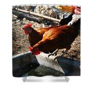 Chicken A La Carte Shower Curtain
