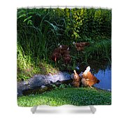 Chicken By The Pond Shower Curtain