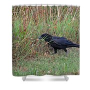 Chicken Eating Crow Shower Curtain