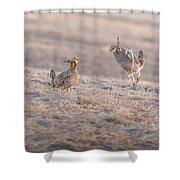 Chicken Fight Shower Curtain