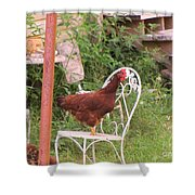 Chicken In The Chair Shower Curtain