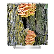 Chicken Of The Woods 2 Shower Curtain