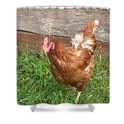 Chicken Portrait Shower Curtain