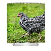 Chicken Walking On Green Pasture Shower Curtain