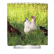 Chickens In Tall Grass Shower Curtain