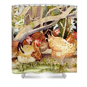 Chickens In The Hedge II Shower Curtain