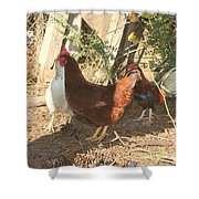 Chickens In The Pin Shower Curtain