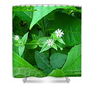 Chickweed Trio Shower Curtain