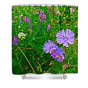 Chicory And Purple Vetch Along Rivier Du Nord Trail In Laurentians-quebec Shower Curtain
