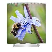 Chicory Bee Shower Curtain
