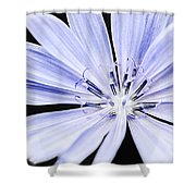 Chicory Flower Macro Shower Curtain