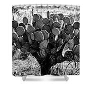 Chihuahua Desert Cactus Bw Shower Curtain