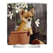 Chihuahua Dog In Flowerpot Shower Curtain