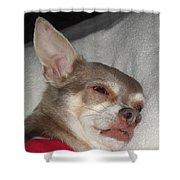 Chihuahua Dreams Shower Curtain