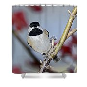 Chikadee On A Limb Shower Curtain