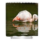 Chilean Flamingo Reflection Shower Curtain