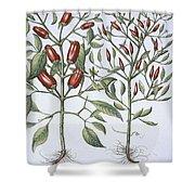Chilli Pepper Plants Shower Curtain