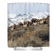 Chimney Rock Rams Shower Curtain