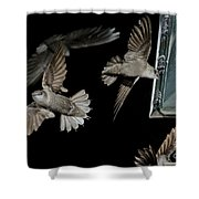 Chimney Swifts Shower Curtain