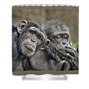 Chimp Couple Shower Curtain