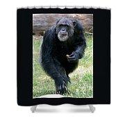 Chimpanzee-5 Shower Curtain
