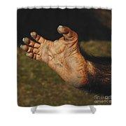Chimpanzee Foot Shower Curtain