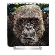 Chimpanzee Male Shower Curtain
