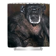 Chimpanzee Portrait Endangered Species Wildlife Rescue Shower Curtain