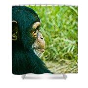 Chimpanzee Profile Shower Curtain
