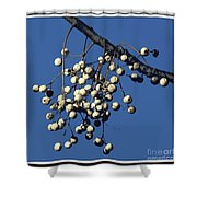 China Berry Cluster Shower Curtain