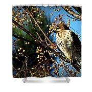 China Berry Hawk Shower Curtain
