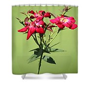 China Rose Shower Curtain