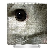 Chinchilla Face Shower Curtain