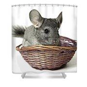 Chinchilla In A Straw Basket  Shower Curtain