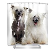 Chinese Crested Dogs Shower Curtain