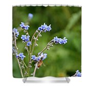 Chinese Forget Me Nots Shower Curtain