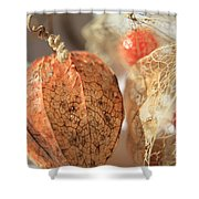 Chinese Lantern Plant - D Shower Curtain
