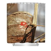 Chinese Lantern Plant - E Shower Curtain