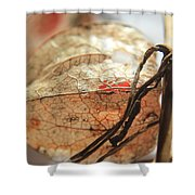 Chinese Lantern Plant - F Shower Curtain