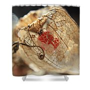 Chinese Lantern Plant - H Shower Curtain