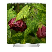 Chinese Lanterns Refreshed By The Rain Shower Curtain