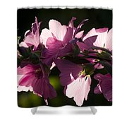 Chinese Mallow Shower Curtain