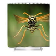 Chinese Paper Wasp Shower Curtain